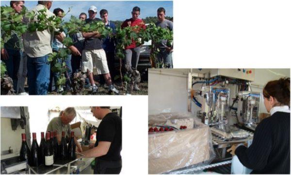Gestion territoriale de l'insertion et besoins d'emplois des entreprises viticoles locales